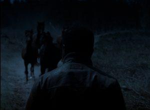 babatunde andre en paarden